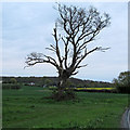TM1730 : Tree on field boundary by Roger Jones