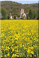SO7740 : Little Malvern Priory and oilseed rape by Philip Halling