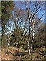 SE1563 : Nidderdale Way, Skrikes Wood by Derek Harper