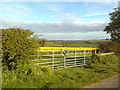SP3535 : A view over oilseed rape, south of Sibford Ferris by Dave Favis-Mortlock