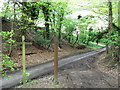 TQ3553 : North Downs Way in Dialbank Wood by David Anstiss