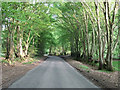 SP9308 : Kiln Road - Spring beeches by Rob Farrow