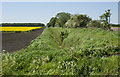SJ7297 : Ditch, field boundary and oil seed rape by Ian Greig