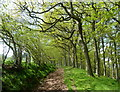 SN9482 : Woodland below Cefn-y-bwlch by Andrew Hill