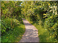 SJ4282 : Path in Speke Hall Estate by David Dixon