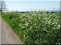 SK0548 : A froth of wild flowers along the verge at Lanehead by Christine Johnstone