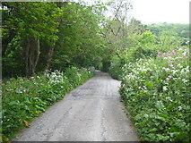 SW7652 : Penwartha Road Bolingey by Rod Allday