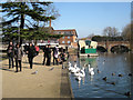 SP2054 : Feeding the swans, Bancroft Gardens by Robin Stott