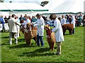 NY9963 : The award winners, junior brown males, Northumberland County Show 2012 by Oliver Dixon