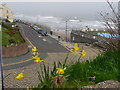 TA1180 : Filey: daffodils and the seafront by Chris Downer