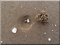 NX9154 : Wormcasts and shells on Mersehead Sands by Walter Baxter