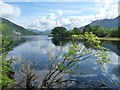 NN0132 : Loch Etive's wooded southern shore by Alan Reid