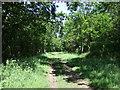 TL1870 : Track through Brampton Wood by JThomas