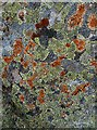 NT1420 : A lichen-covered stone at Fans Law : Week 24