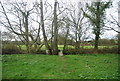 TQ9031 : Footbridge, High Weald Landscape Trail by N Chadwick