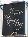 TQ3203 : Sign for The Ginger Dog, College Place / Clarendon Place, BN2 by Mike Quinn