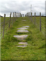 SJ9699 : The Path from Heyrod towards Ridge Hill by David Dixon