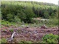 SK2291 : Woodland clearance near Strines Bridge by Graham Hogg
