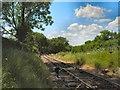 TQ8833 : Kent & East Sussex Railway - Tenterden by Paul Gillett