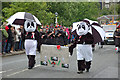 NT2540 : Pandas in Peebles : Week 26