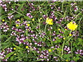 TQ0349 : Chalk Grassland Flowers by Colin Smith