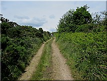 S6233 : Country Lane by kevin higgins