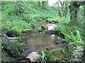 SW4425 : Stream through the woods by David Medcalf