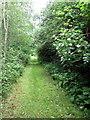 SP9341 : Path to Leys Farm by Philip Jeffrey