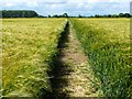 SK9363 : Cut path across barley field by Oliver Dixon