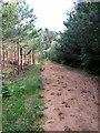 SP9334 : Bridleway towards Horsemoor Farm by Philip Jeffrey