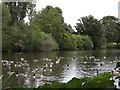 SU9747 : The Lake, Loseley Park by Colin Smith