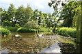 SJ5758 : Millpond, Bunbury Mill by Chris Allen