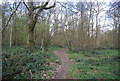 TR0748 : Stour Valley Walk, Warren Wood by N Chadwick