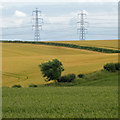 TA0019 : Wheat and Pylons by David Wright