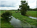 ST9997 : The young River Thames looking good after all this summer's rain by Ruth Sharville