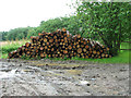 TL8033 : Stacked logs by Rookery Wood by Evelyn Simak
