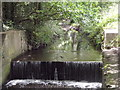 TQ2163 : Hogsmill River, Ewell by Colin Smith