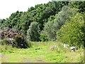 SE3340 : Edge of the woodland, west of Wike Ridge Lane by Christine Johnstone