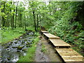 SD5348 : New board walk in Holme Wood, Grizedale by John Darch