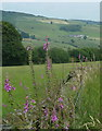 SK2473 : Fields, wall and foxgloves by Andrew Hill