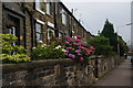 SD8614 : Terraced cottages at the bottom of Old Delph Road by Bill Boaden