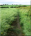 SK6916 : Leicestershire Round Footpath by Mat Fascione