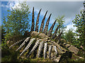 SD3495 : 'Some Fern', a Grizedale Forest sculpture by Karl and Ali