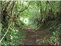 SU8020 : Footpath 869 north of East Harting : Week 32