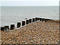 TV6198 : Gull on Groyne, East Beach by David Dixon