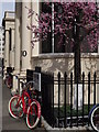 TQ2980 : Late Spring in Carlton House Terrace by Colin Smith