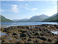 NM9844 : Seaweed on the foreshore of Loch Creran by Alan O'Dowd
