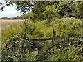 TQ0305 : Overgrown Stile by David Dixon