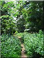 SO8578 : Footpath in Hurcott Wood, looking south, near Kidderminster by P L Chadwick