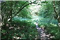 SP0414 : Footpath in Chedworth Woods by Terry Jacombs